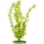 MONEWORT - LARGE 12 PP1216