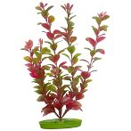 RED LUDWIGIA - LARGE 12 PP1219