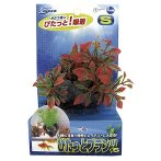 PITATTO PLANTS - RED (SMALL) NAP181