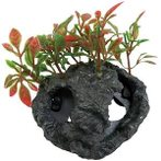 PITATTO PLANTS - RED (MEDIUM) NAP183