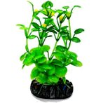 AQUATIC PLANTS MEDIUM - 1 NAP360