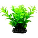 AQUATIC PLANTS MEDIUM - 7 NAP366