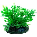 AQUATIC PLANTS SS - 3 NAP302