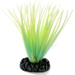 LUMINOUS PLANT NIGHT MEDIUM - 1 NAP220