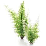 AQUATIC WINTER FERN SET 2 BIO46066